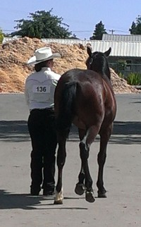 Student and BLM yearling