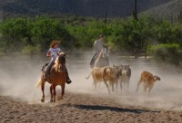 Team Penning Events