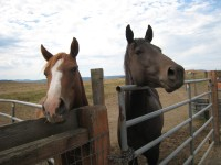 Boarders at FitzGerald Farms Boarding Facilities | Yamhill, OR
